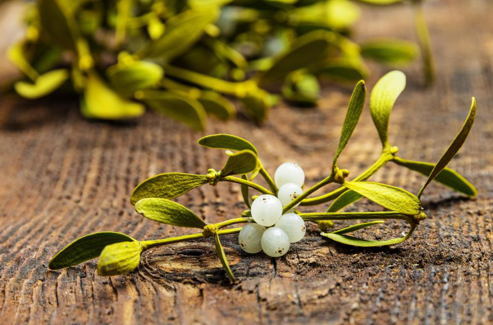 Mistletoe white berries